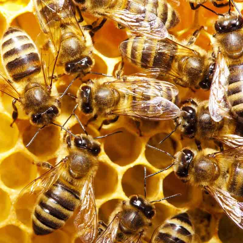 honeycells